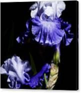 Alaskan Seas Iris  Canvas Print