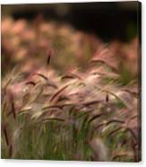 Alaskan  Summer Foxtail Canvas Print