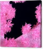 Alcyonarian Coral Canvas Print