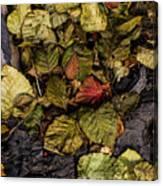 Alder Leaves Dan Creek 2015 Canvas Print