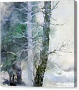 Alders And Cedar Canvas Print