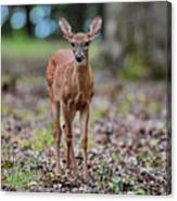 Alert Fawn Deer In Shiloh National Military Park Tennessee Canvas Print
