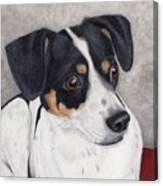 Alert Little Rat Terrier  Canvas Print