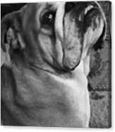 Alfred Hitchcock Bullie Pose Canvas Print
