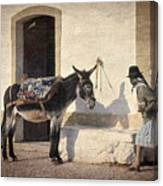 Algarve Donkey Canvas Print