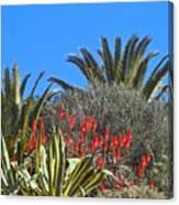 Algarve Plants Canvas Print