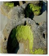 Alge On Beach Rock Formation Canvas Print