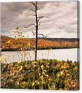 Algonquin Autumn Canvas Print