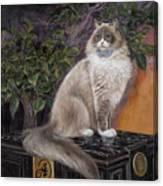 Algonquins Matilda Canvas Print