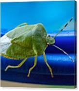 Alice The Stink Bug 3 Canvas Print