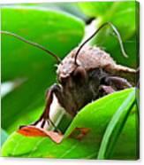 Alien Moth Canvas Print