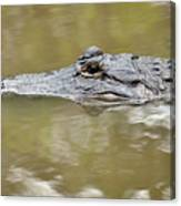 Alligator Stealth Canvas Print