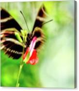 All A-flutter Canvas Print