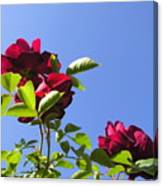 All About Roses And Blue Skies V Canvas Print