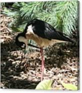 All Clear - Bird Looking Under Legs Canvas Print