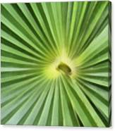 All Green Canvas Print