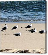All My Gulls In A Row Canvas Print