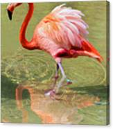 All Ruffled Up Canvas Print