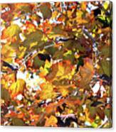 All The Leaves Are Red And Orange Fall Foliage With Sunshine Canvas Print