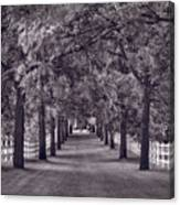 Allee Way Bw Canvas Print