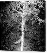 Allee_des_arbres Canvas Print