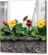 Allen Garden - Toronto Canvas Print