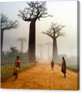 Alley Of The Baobab Canvas Print