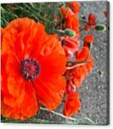 Alley Orange Red Poppies  Canvas Print