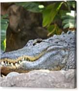 Alligator 1 Canvas Print