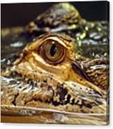 Alligator Eye Close Up-2 Canvas Print