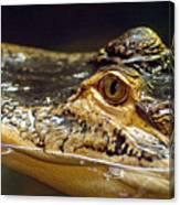 Alligator Eye Close Up Canvas Print