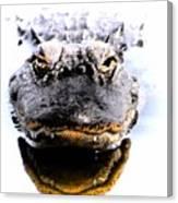 Alligator Fangs 2 Canvas Print
