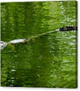 Alligator In Wait Canvas Print