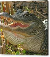 Alligator Showing Its Teeth Canvas Print