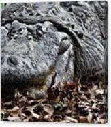 Alligator Waiting Canvas Print