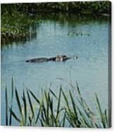 Alligators Canvas Print