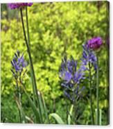 Allium And Camassia Canvas Print