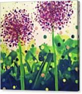Allium Explosion Canvas Print