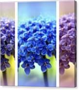 Allium Triptych Canvas Print