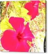 Almeria Flowers Canvas Print
