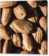 Almond Nuts Canvas Print