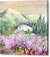 Almond Trees In Altea La Vieja Canvas Print