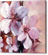 Almonds Blossom  12 Canvas Print