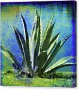 Aloa Blue Canvas Print