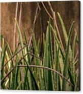 Aloe 3 Canvas Print
