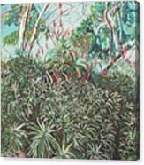 Aloe Garden Vumba Canvas Print