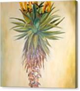 Aloe In The Sunlight Canvas Print