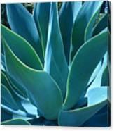 Aloe 2 Canvas Print