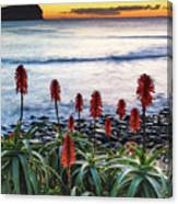 Aloe Vera In Flower At The Seaside Canvas Print