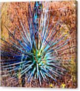 Aloe Vera In Meadow Canvas Print